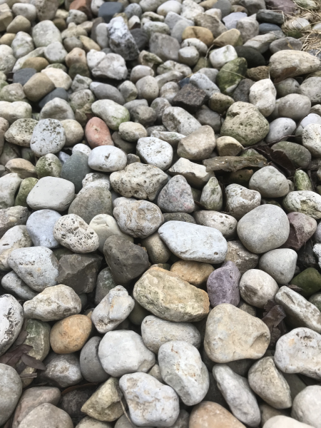 Pebbles in the author's yard.
