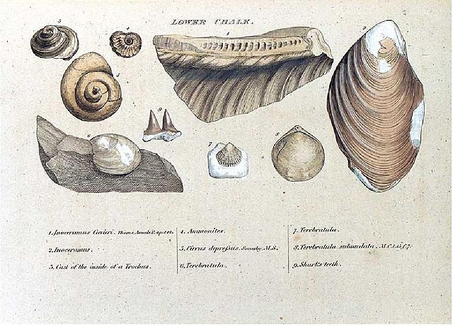 Engraving from William Smith's 1815 monograph on identifying strata by fossils.