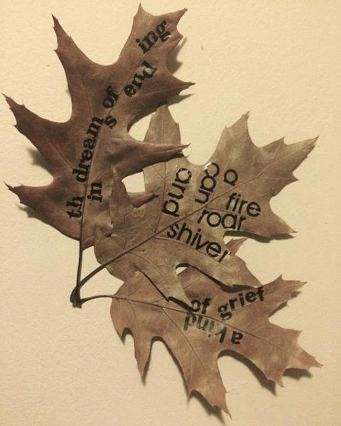 letraset on autumn leaves