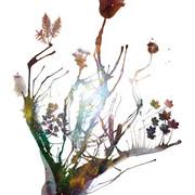 "Ualani Davis, ""Stardust"" (2010, archival pigment prints)"