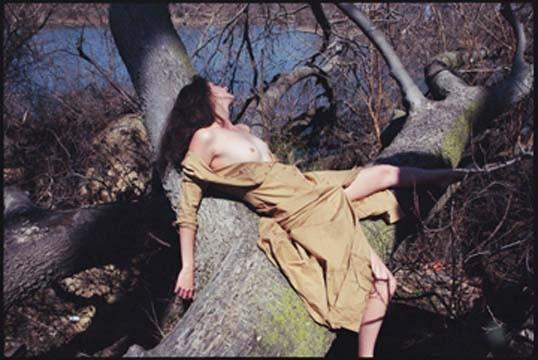 Emma Bee Bernstein  Courtney-forest-at-nightfall
