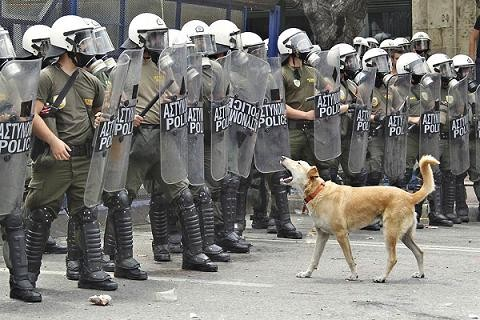 riot dog of Athens