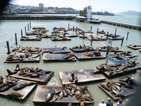 toward a commons of, among others, sea lions...