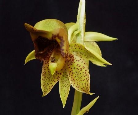 (hermaphrodite flower)